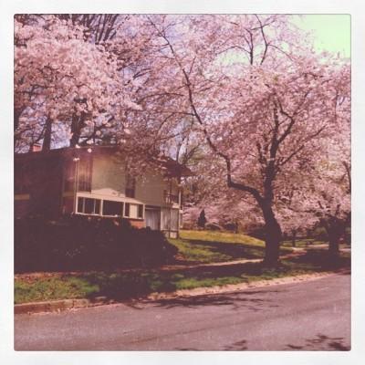 RCW Cherry trees
